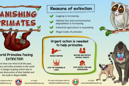 Vanishing Primates-Friend of the Earth Infographic