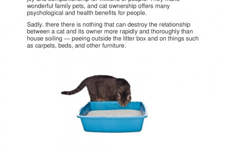 VET Reveals How to Stop Your Cat Peeing Outside the Litter Box PERMANENTLY! Infographic
