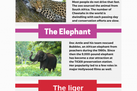 Visit TIGER Safari Zoo in Myrtle Beach Infographic