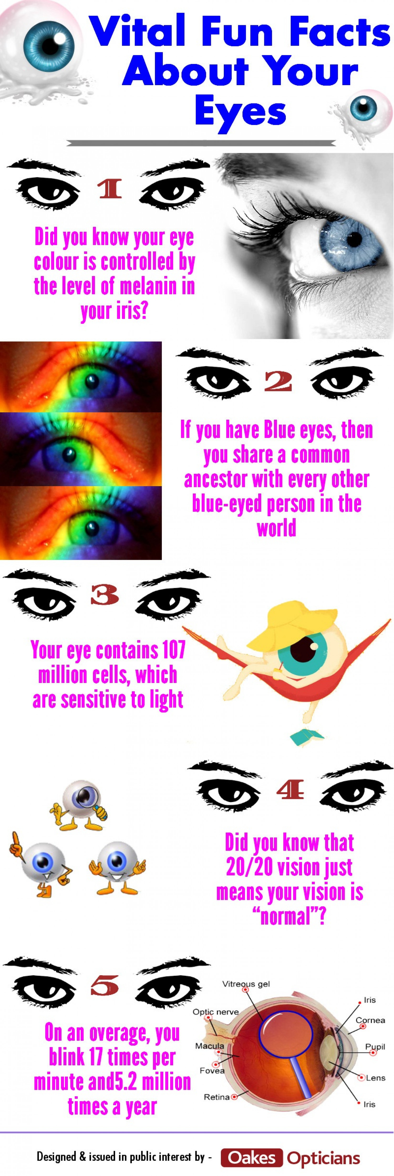 Vital Fun Facts About Your Eyes | Visual ly