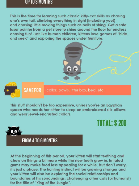 How to Raise a Kitten: What to Expect in the First Year... Infographic