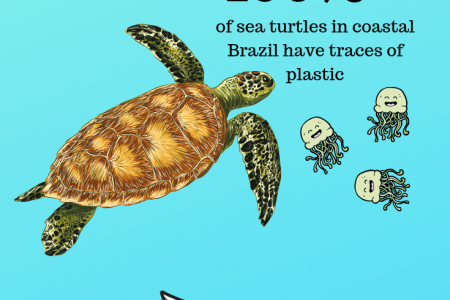 Water Creatures that could dissappear in the next few years Infographic