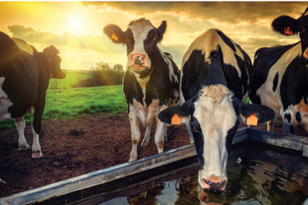 Water Treatment for Dairy Farmers in New Zealand Infographic