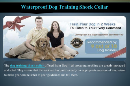 Waterproof dog training shock collar Infographic