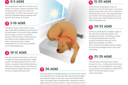 What Happen to Your Dog When Left In A Hot Car? Infographic