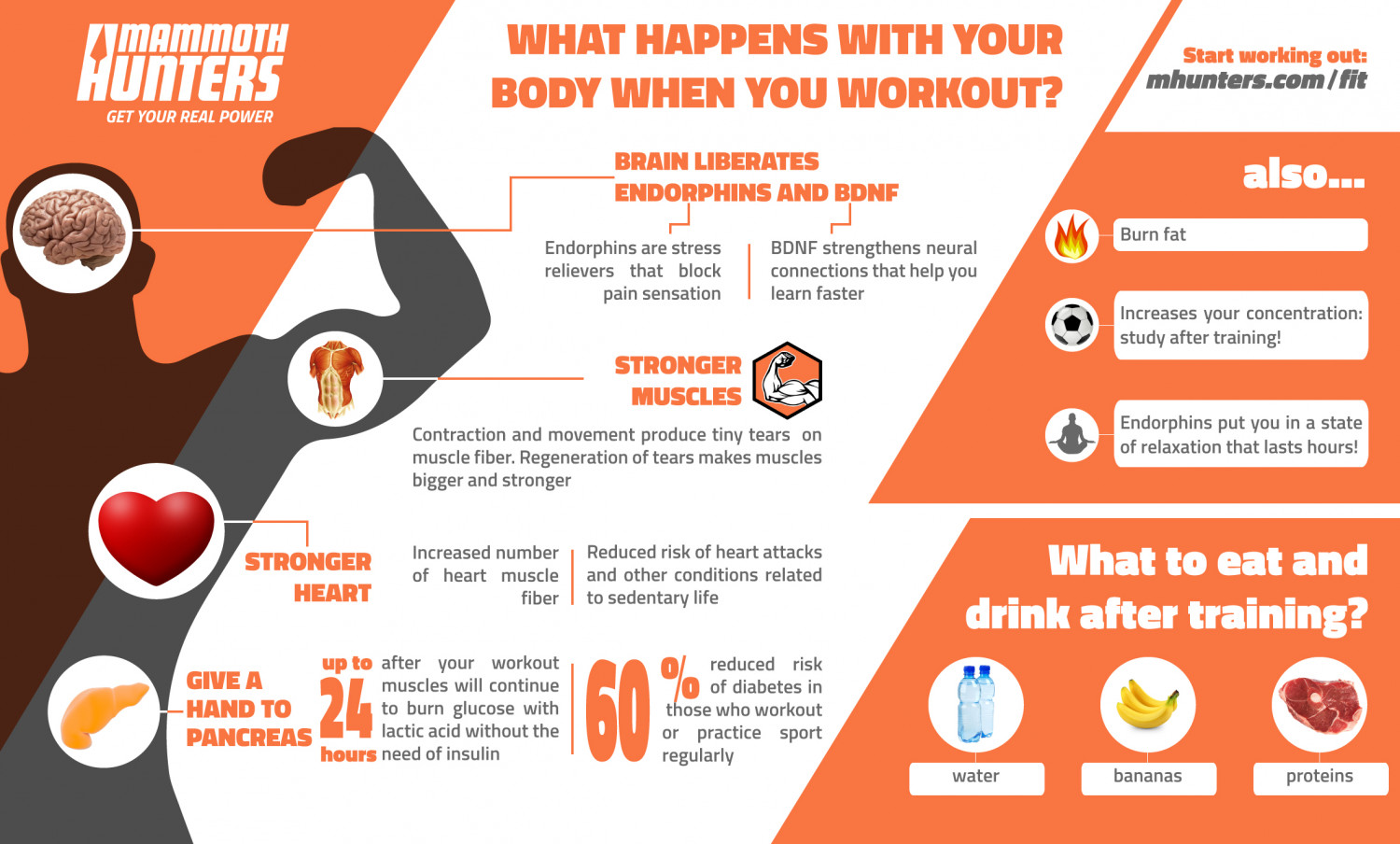 What happens with your body when you workout? Infographic