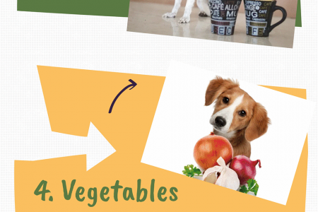 What human foods are bad for Dogs? Infographic