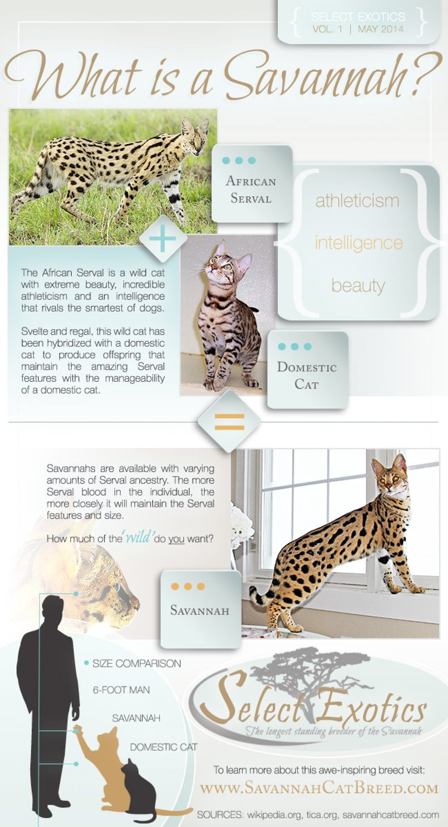 What Is a Savannah? Infographic