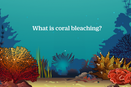What Is Coral Bleaching? Infographic