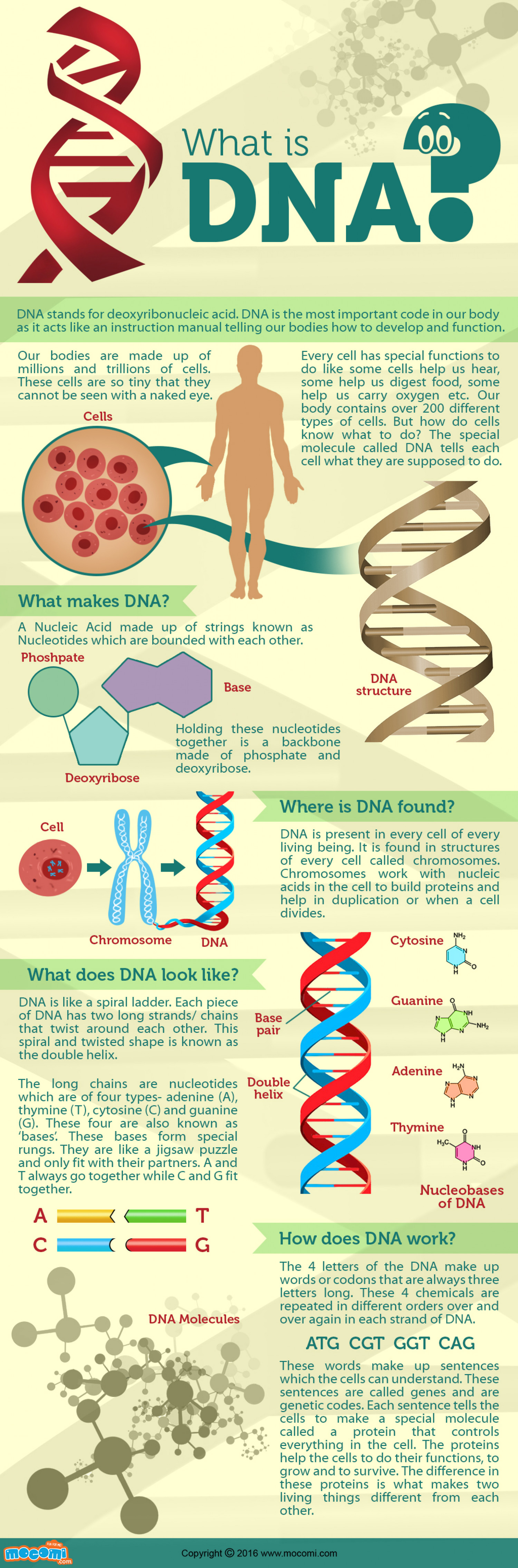 What is DNA? Infographic
