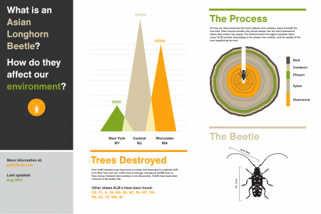 What is the Asian Longhorned Beetle? Infographic