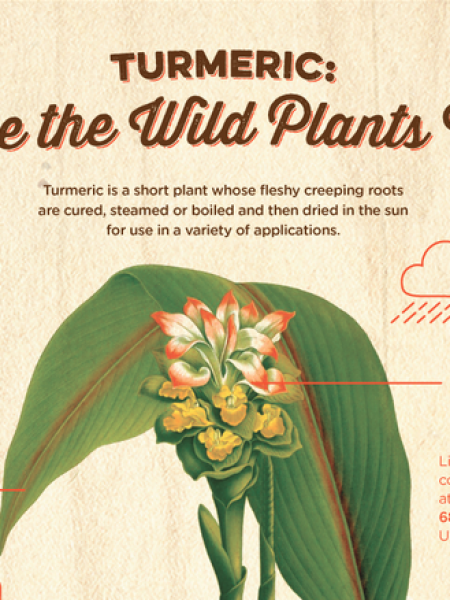 What is Turmeric, Botanically Speaking? Infographic