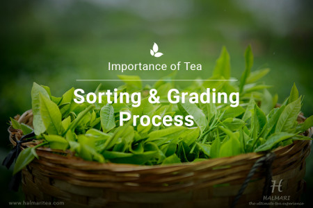What Makes the Process of Tea Sorting and Grading Important Infographic