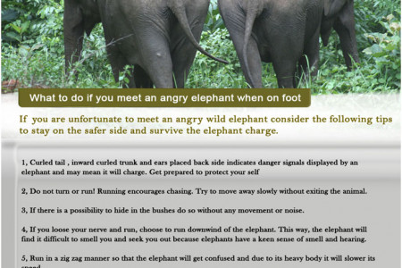 What To Do If You Meet An Angry Elephant When On Foot Infographic