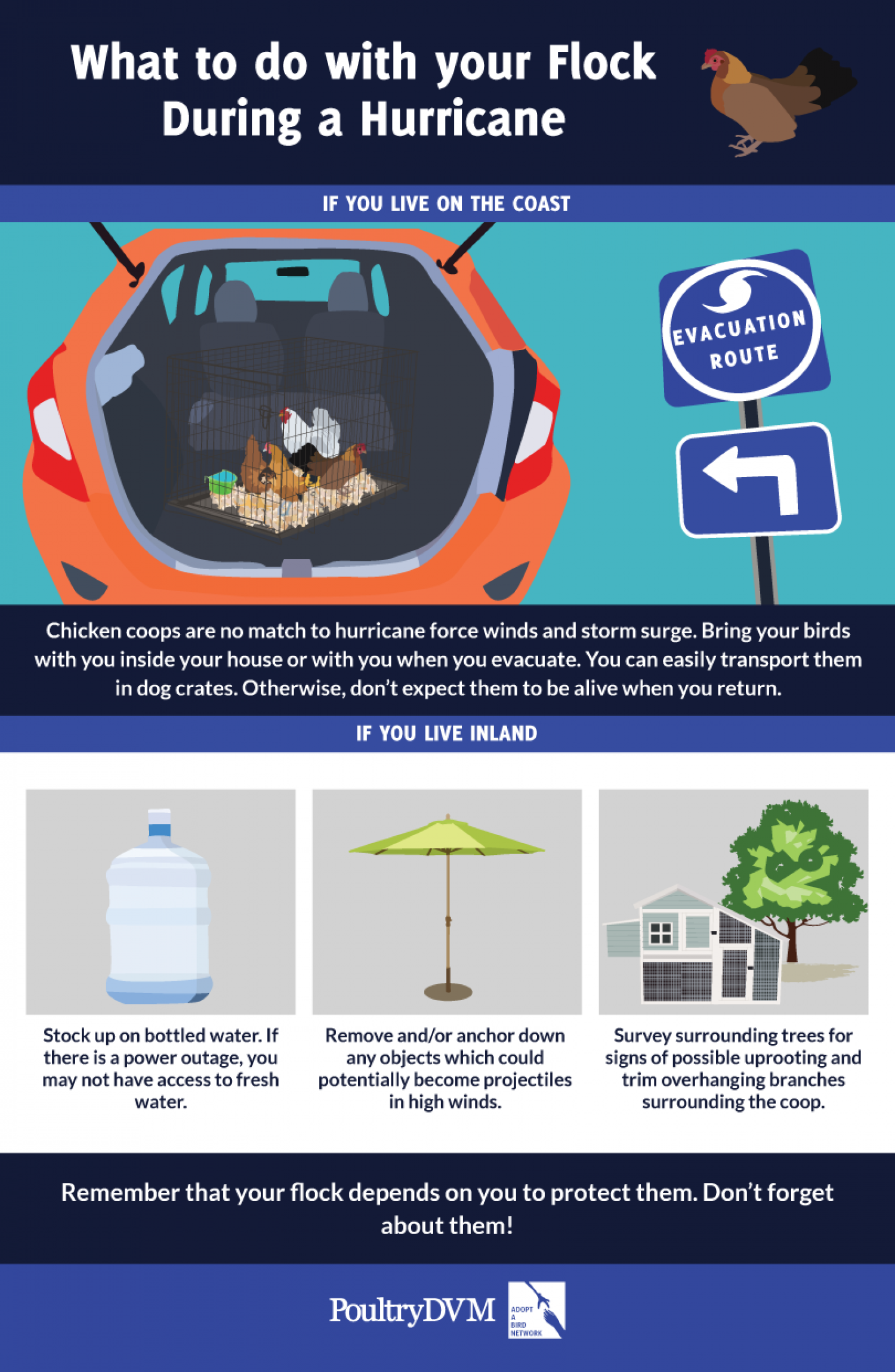 What to do with your Flock During a Hurricane Infographic