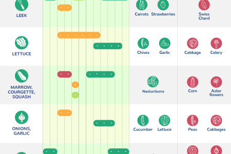 What To Plant When: A Visual Planting Calendar Infographic