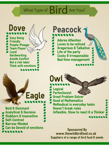 What Type of Bird are you? Infographic