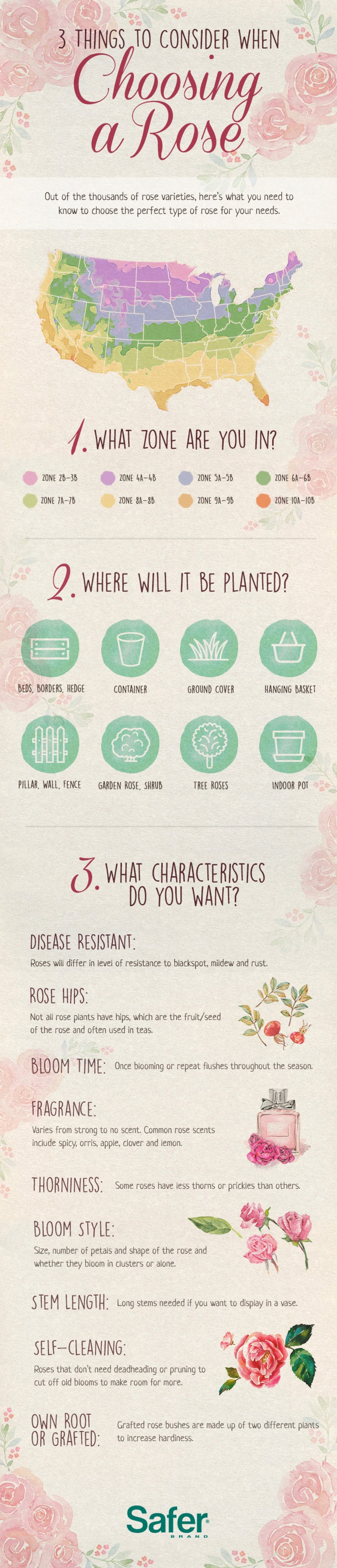 What Type of Rose Should I Plant Infographic