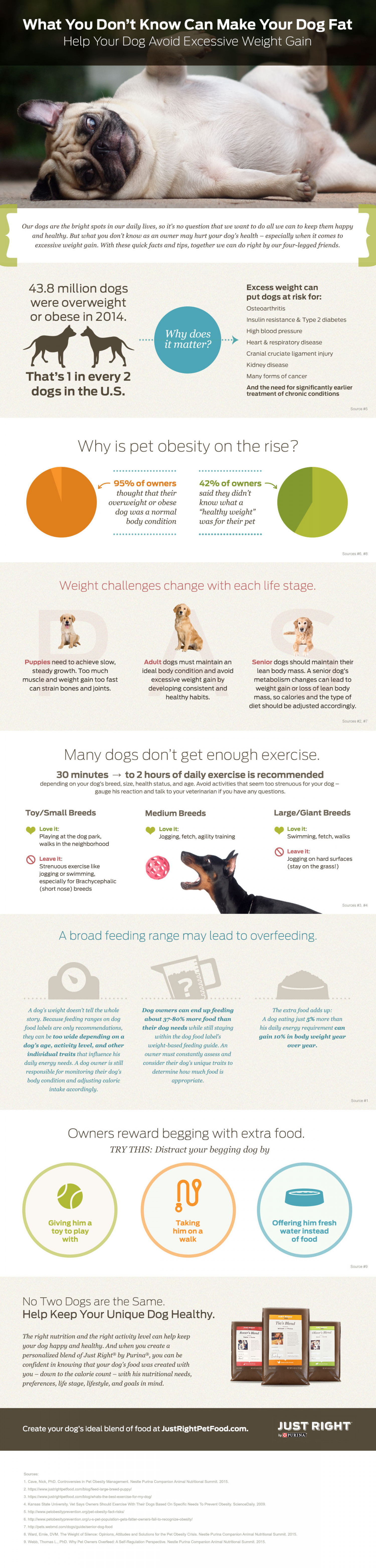 What You Don't Know Can Make Your Dog Fat Infographic
