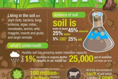 What's in our soil? Infographic
