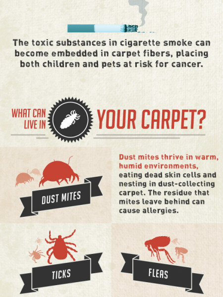 What's Living In Your Carpet? Infographic