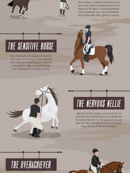 What's Your Horse's Personality? Infographic