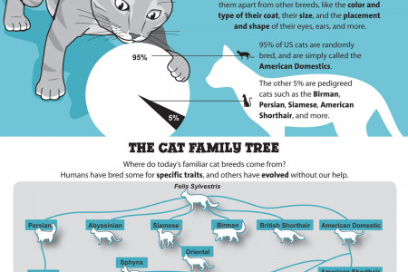 Where Do Different Cat Breeds Come From? Infographic