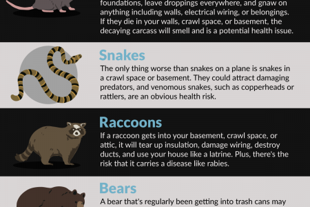 Which Animals Cause the Most Damage to Your Home and Foundation? Infographic