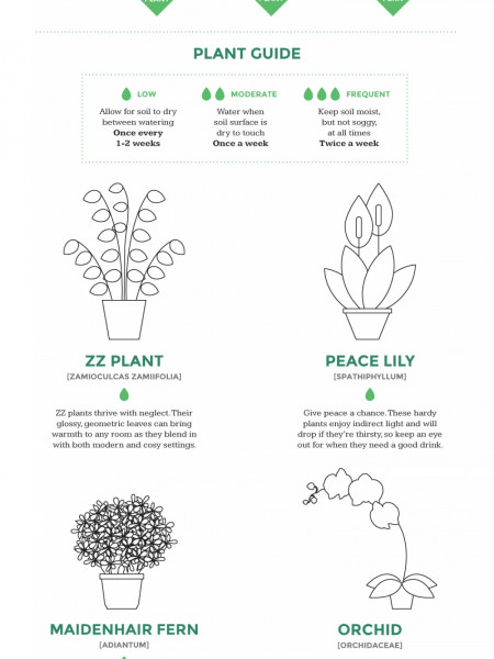 Which indoor plant is right for your home? 0 Infographic