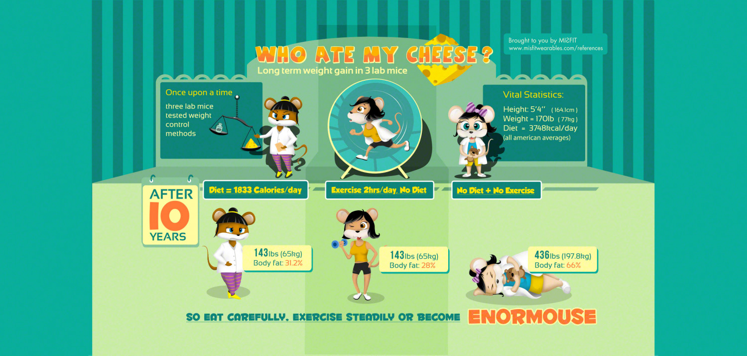 Who Ate My Cheese - Long term weight gain in 3 lab mice Infographic