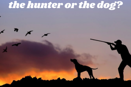 Who gets the bird, the hunter or the dog Infographic