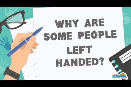 Why are some people left handed? Infographic