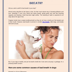 Why Does Your Dog Have Bad Breath? | Visual.ly