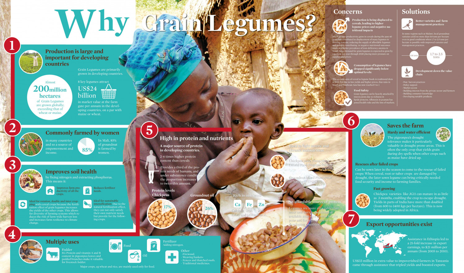 Why Grain Legumes? Infographic