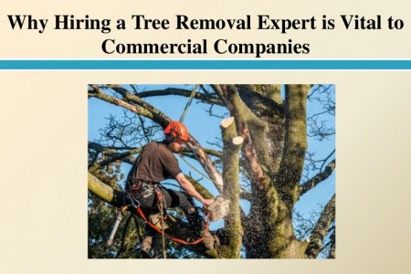Why Hiring a Tree Removal Expert is Vital to Commercial Companies Infographic