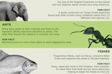 Wild Animals With Unusual Seed Dispersal Roles Infographic