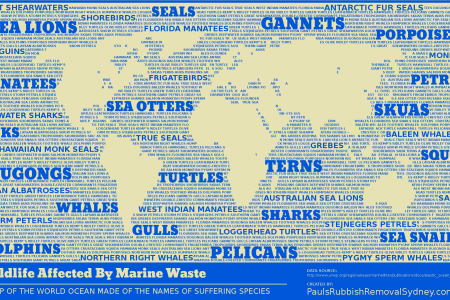 Wildlife Affected By Marine Waste Infographic