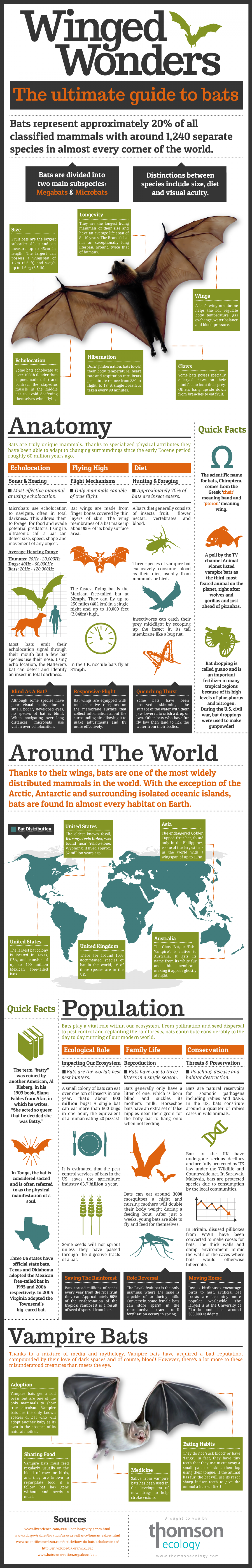 Winged Wonders Infographic