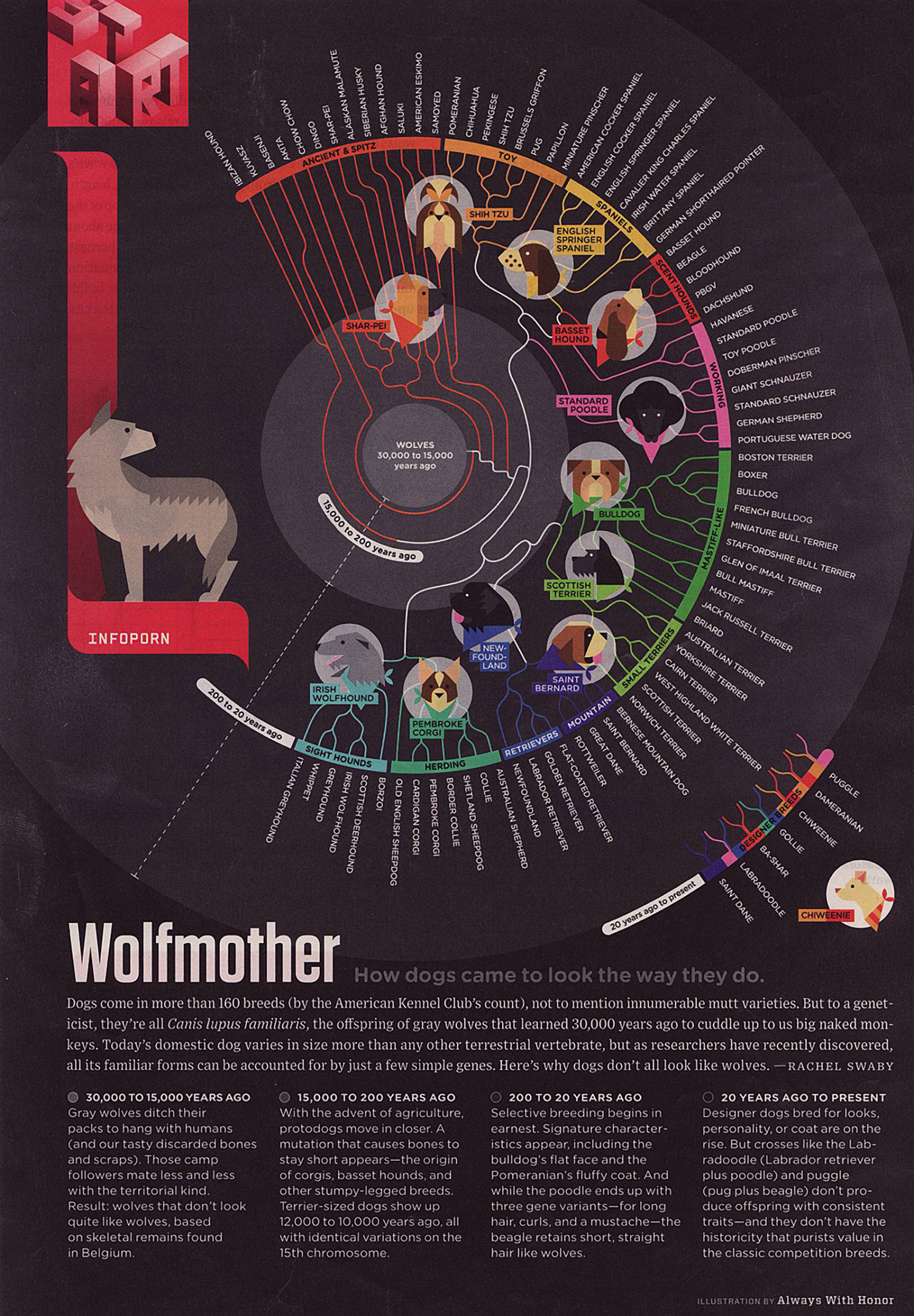 Wolfmother How Dogs Came to Look the Way They Do Infographic