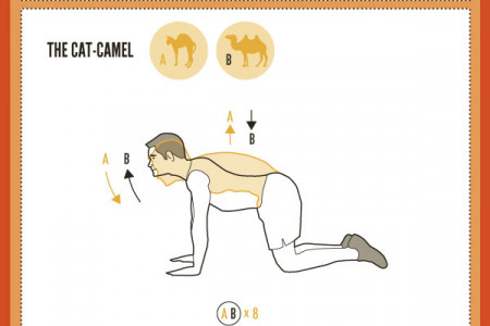 Work Your Abs Like An Animal Infographic