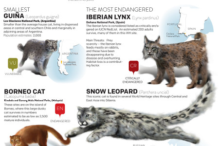 World Heritage Sites a Refugee for endangered cats  Infographic