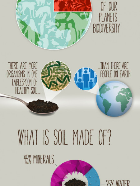 World Soil Day 2014 - Where Food Begins - 5th December Infographic