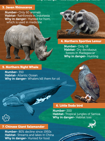 World's Top 10 Endangered Species Infographic