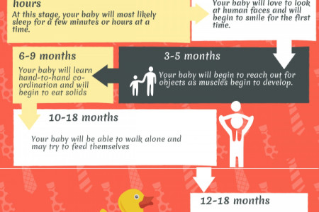 Your Baby's Development a Timeline. Infographic