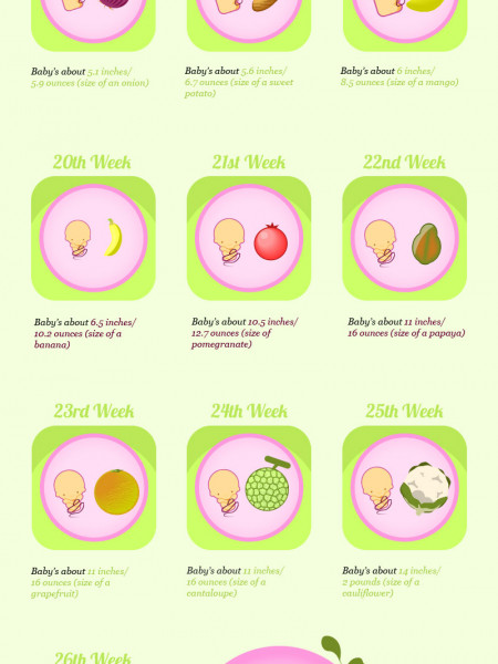 Your Baby's Size Week by Week Infographic