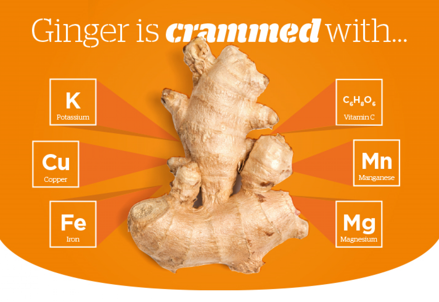 Ginger is Crammed with... Infographic